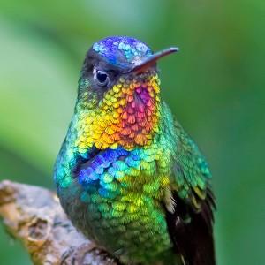 Hummingbird_detail-Joseph_f_Pescatore